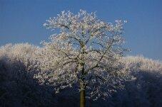 Rengshausen im Winter